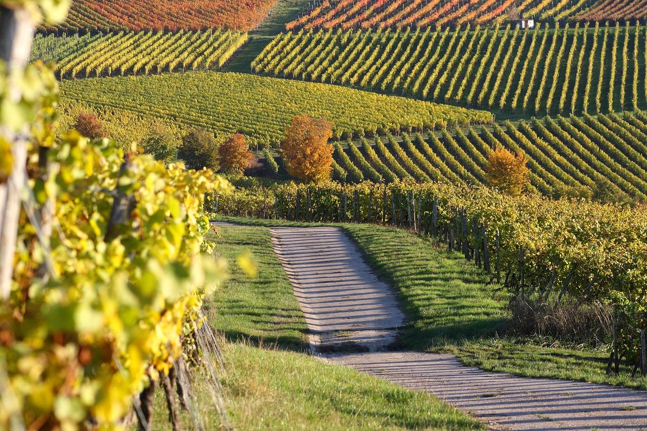 Gewinnspiel - Weinpaket der WEINCROWD aus Rheinhessen Hessen Wein Weine Vino Weinberge Weinberg Benjamin Schmitt Weinblogger Winzer Reinhard Seidel